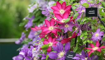 Всемирно известная выставка цветов и садоводства в Челси 2020